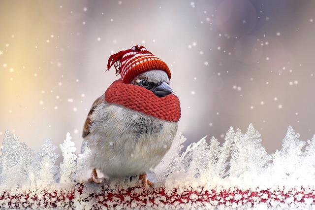 sparrow-2770911_640